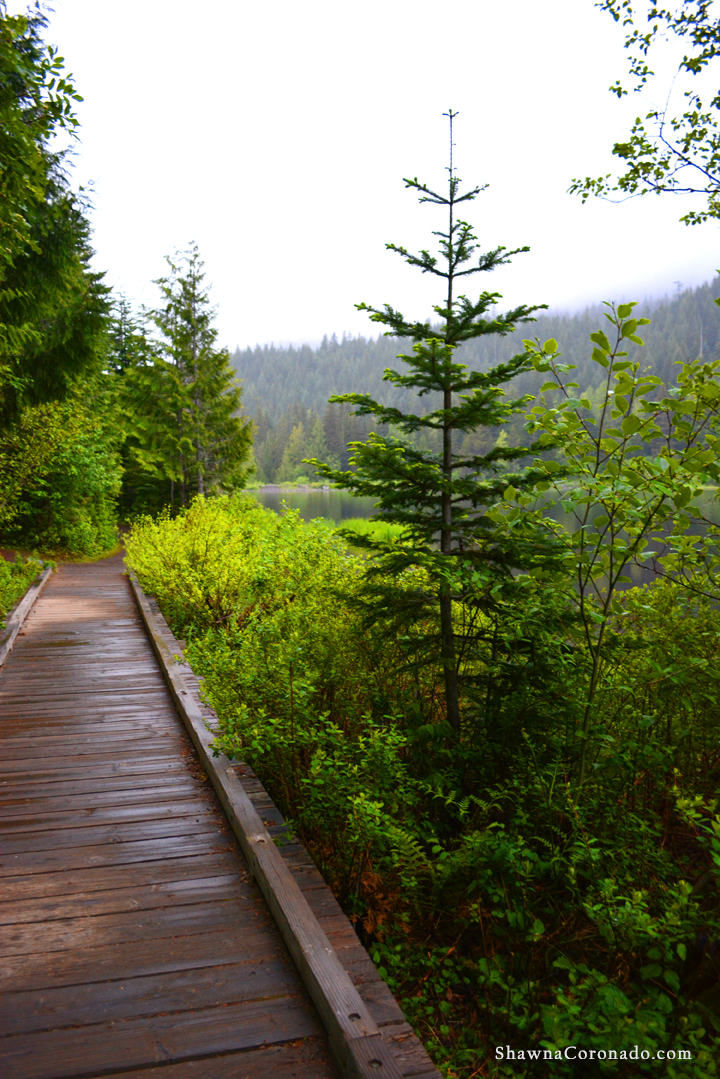 Lake Trillium and Pines copyright Shawna Coronado