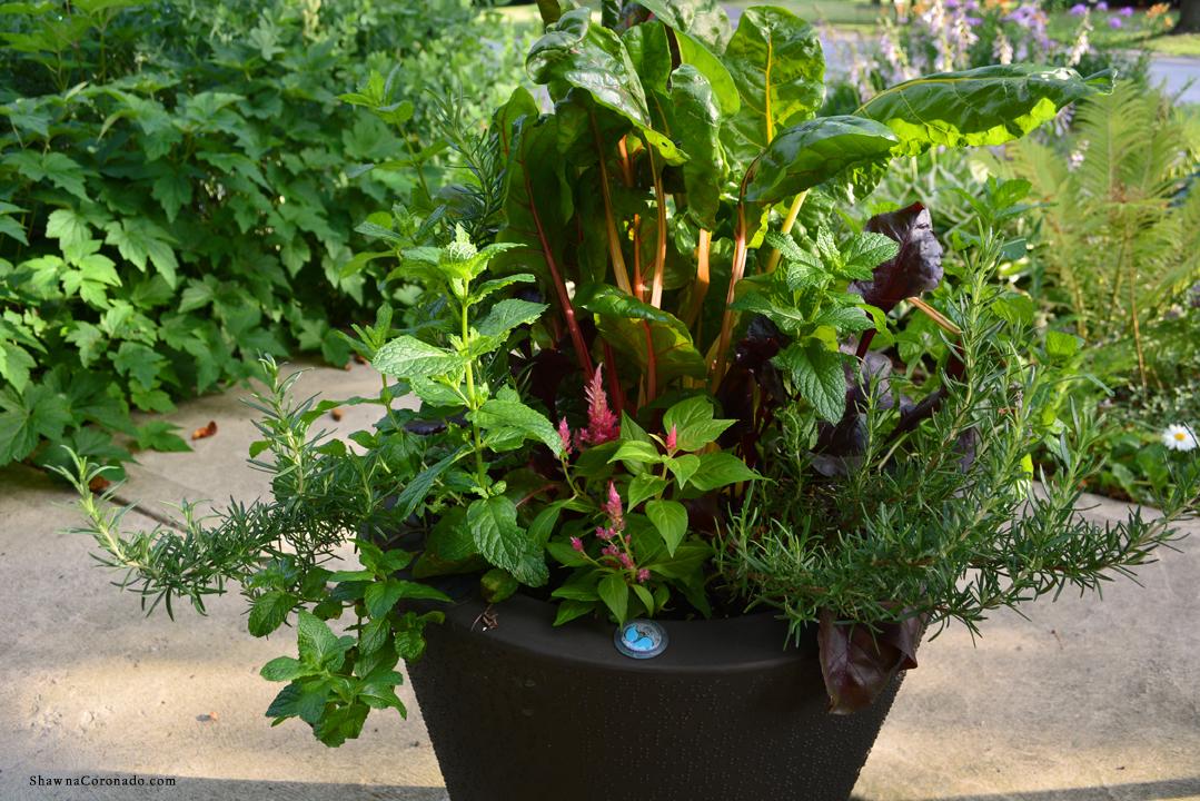 Best Self-Watering Garden Container