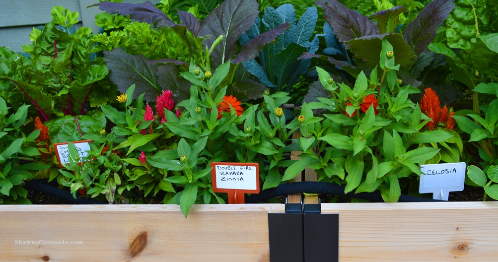 BioMarker Plant Markers in Elevated Beds