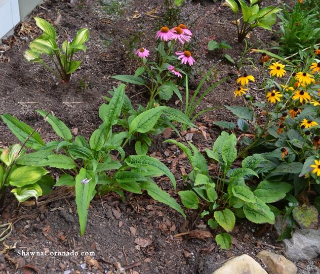 Small Perennial Pollinator Garden