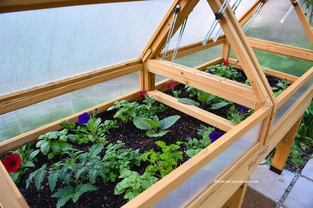 VegTrug Elevated Beds with Wave Petunias and Tomatoes