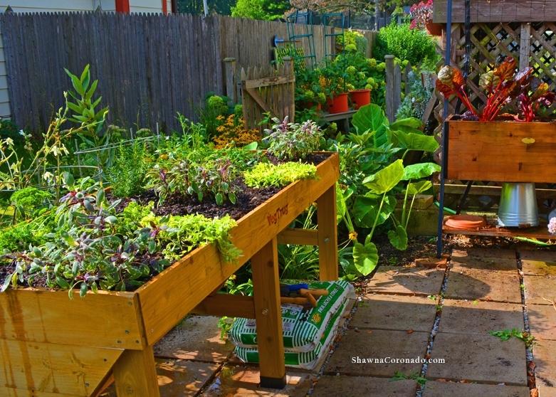 Herb Garden Elevated Bed