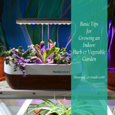 Indoor Vegetable Gardening Guide for Beginners