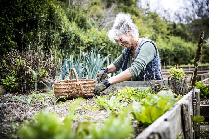 Garden lady gardening in raised bed