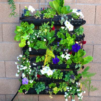Living Wall Garden Quick Growing Guide