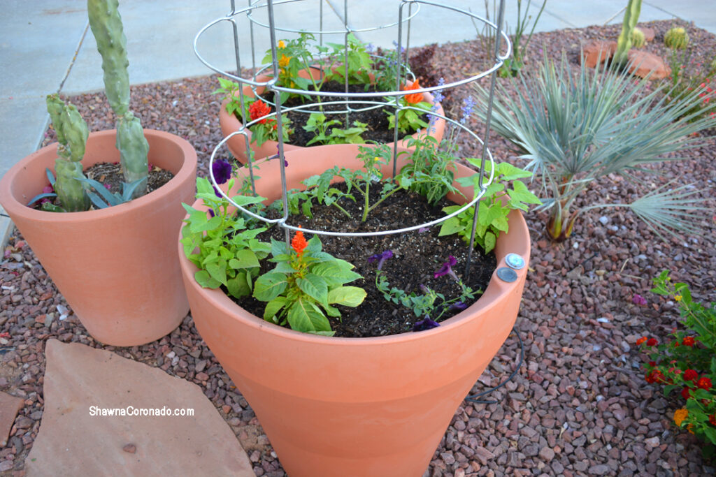 Crescent Garden 26 inch Containers with Tomatoes and Annuals