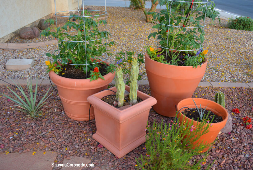 Crescent Garden Planted Brunello and Trudrop Rim 26 inch Containers