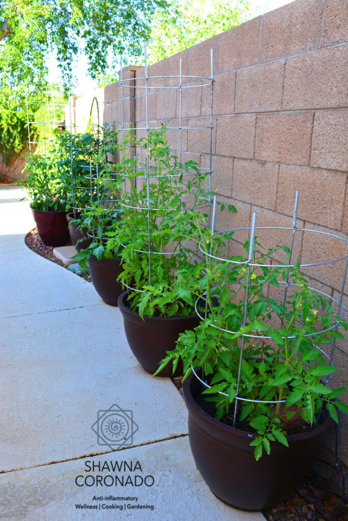 Tomato-cages-in-row-of-container-gardens