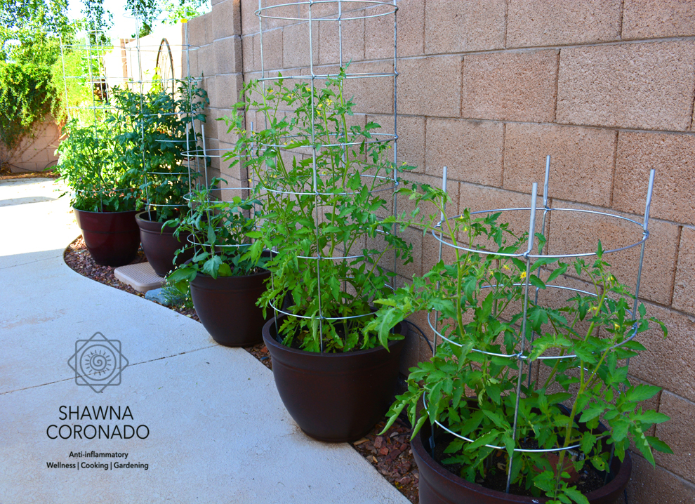 tomato-container-gardens-with-tomato-cages