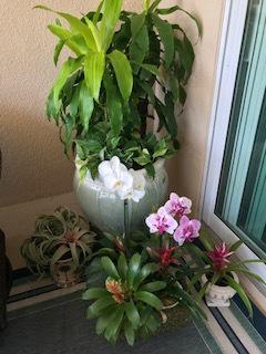 Display-of-various-bromeliads-orchids-corn-plants-pothos