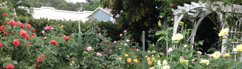 Greater Palm Beach Rose Society