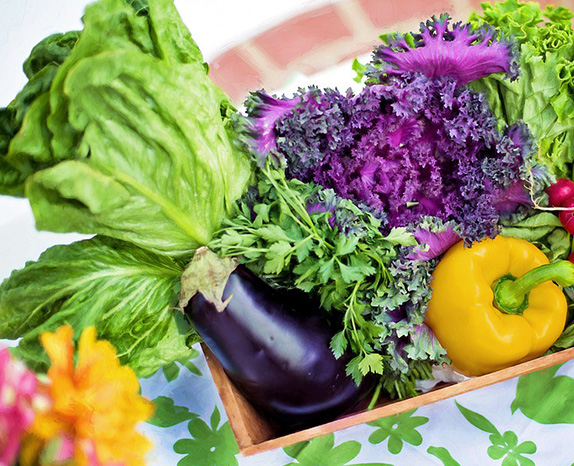 Nutrition Counseling Options, Lee Physical Therapy & Wellness, Cairo New York