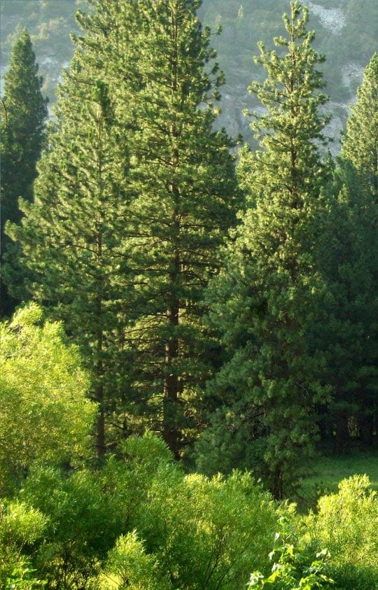 tree and shrub services