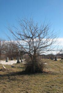 grave front color