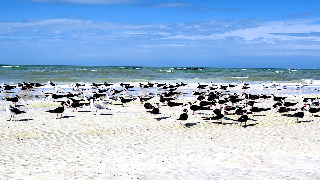 Fort de Soto Beach is very natural, including a array of Florida birds
