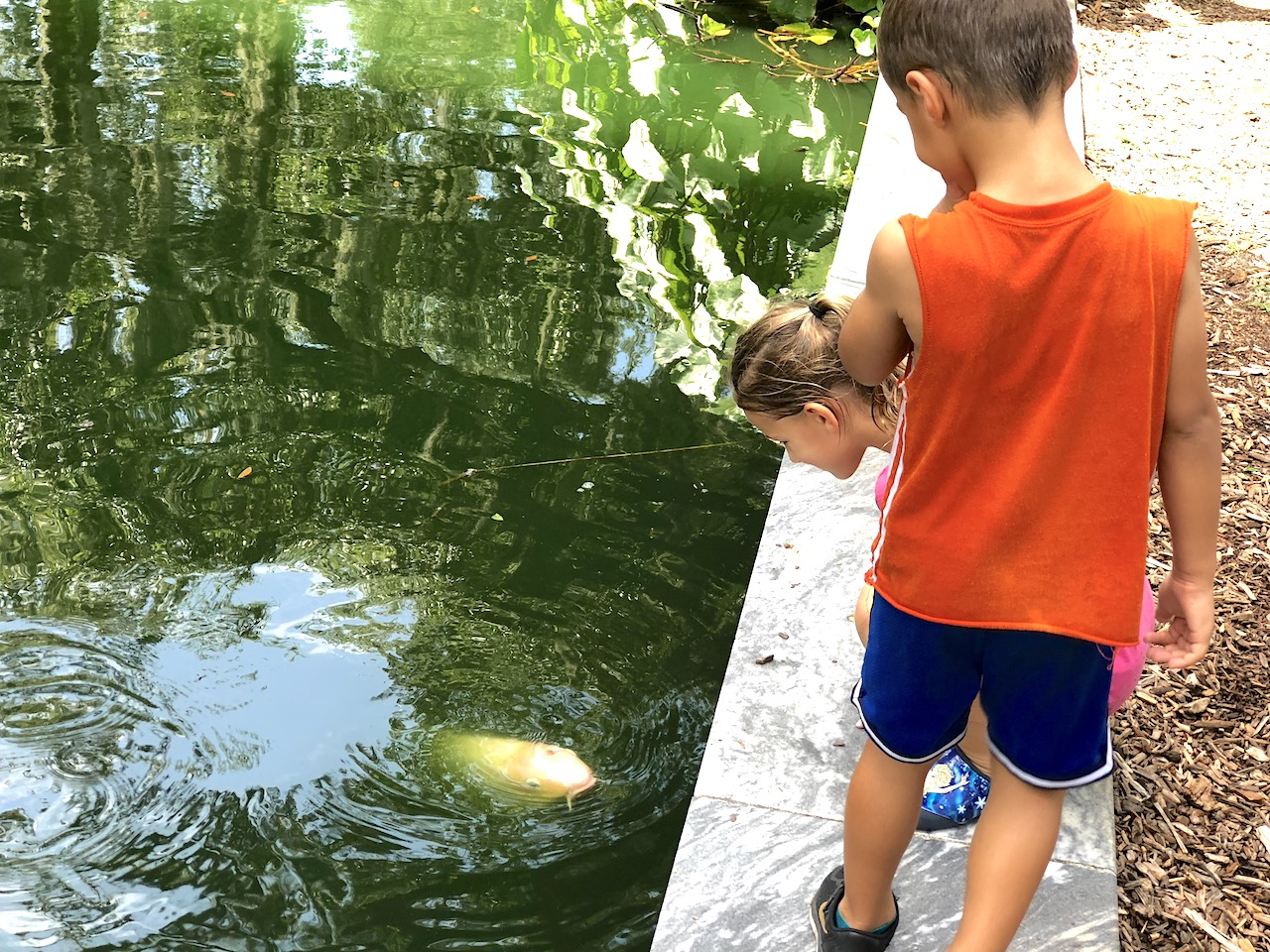 Koi Fish at Bok Tower Gardens