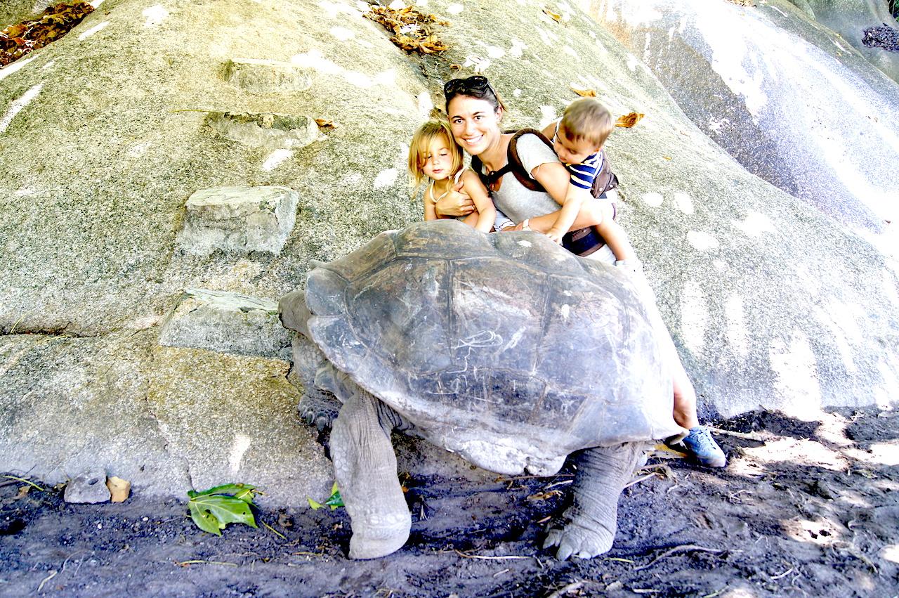 Giant tortoise on La Digue, Seychelles. One of the most beautiful Seychelles Islands! #Seychelles #LaDigue #SeychellesBeach #LaDigueSeychelles #NatureWalk #Tortoise