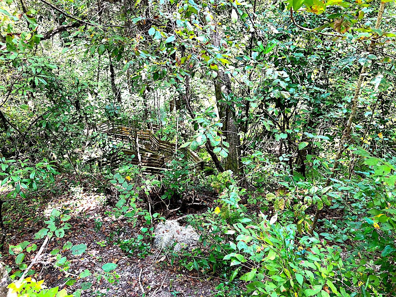 Devil's Millhopper State Park Boardwalk - 2-day itinerary for families in Gainesville, FL #gainesville #florida #tourofflorida #alachuacounty #gainesvilleFL #universityofflorida #UF #gogators #Gainesvillewithkids #gainesvilleitinerary
