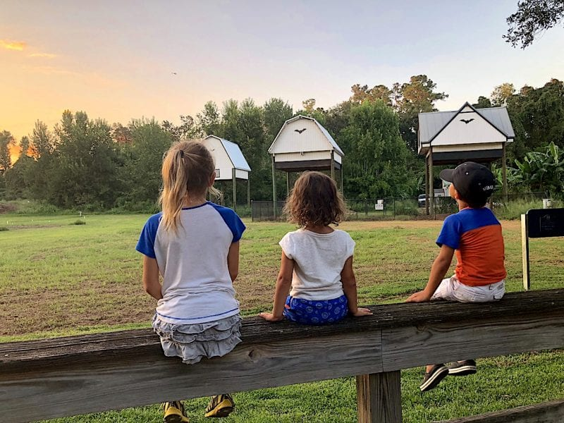 UF Bat Houses with Kids - 2-day itinerary for families in Gainesville, FL #gainesville #florida #tourofflorida #alachuacounty #gainesvilleFL #universityofflorida #UF #gogators #Gainesvillewithkids #gainesvilleitinerary