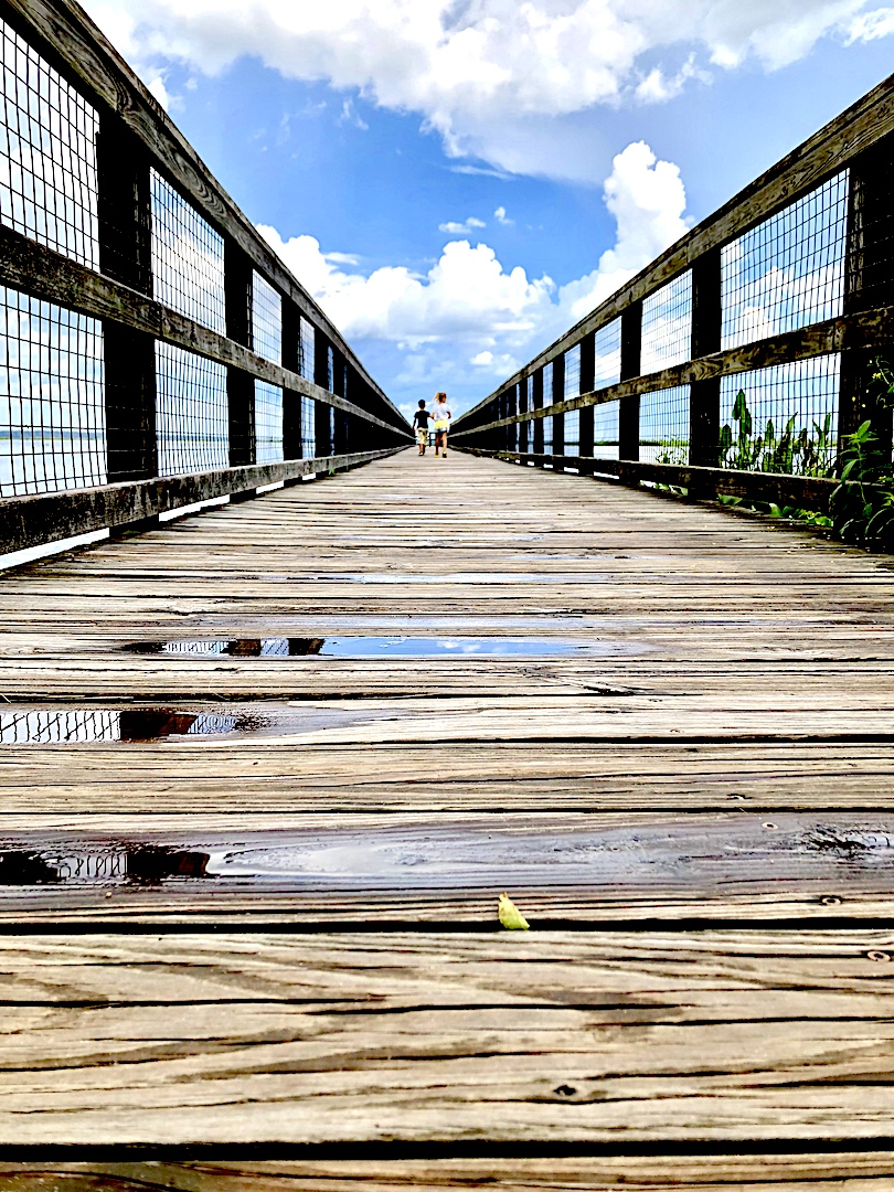 Paynes Prairie Preserve State Park - 2-day itinerary for families in Gainesville, FL #gainesville #florida #tourofflorida #alachuacounty #gainesvilleFL #universityofflorida #UF #gogators #Gainesvillewithkids #gainesvilleitinerary