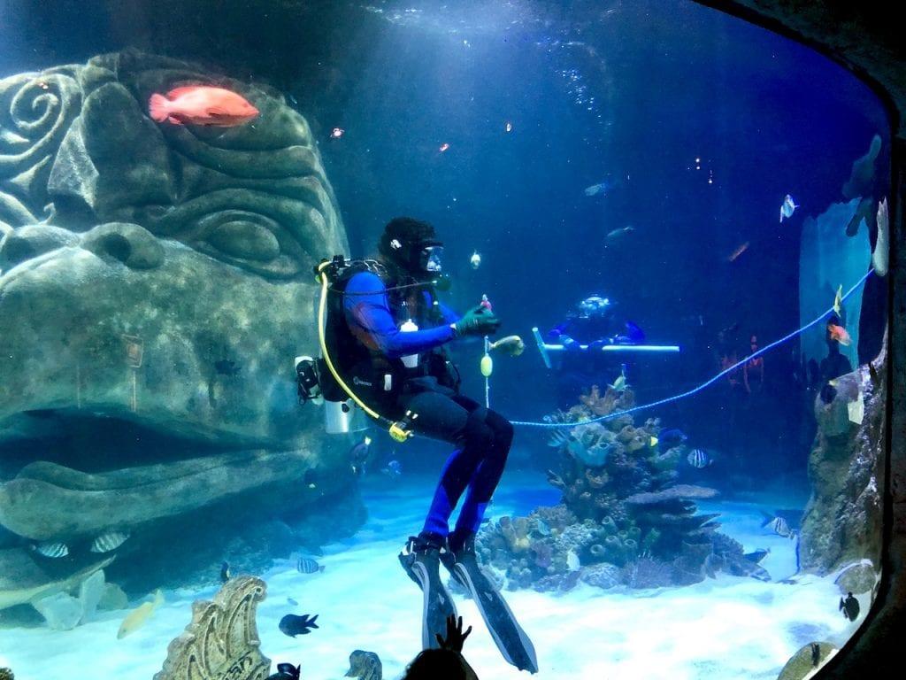 5 Reasons To Visit SEALife Orlando | Orlando attractions that are not theme parks | SEALife Orlando aquarium | Orlando with kids | ICON Park Orlando | Orlando eye | Florida aquarium | #sealife #sealifeorlando #orlandoaquarium #orlandoattractions #orlandowithkids