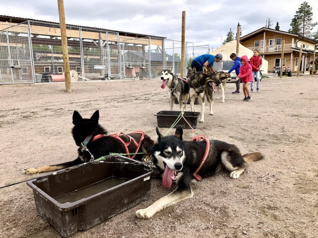 Amazing Dog Sledging In Rovaniemi With Kids - At Bearhill Husky Tours | Visiting Rovaniemi with kids | Lapland travel with kids | World schooling in Lapland | Visit Rovaniemi | Alaskan huskies in Finland | Finnish experience in Rovaniemi with kids | Best husky kennels in the world | Finland travel with kids | #rovaniemi #alaskanhuskies #doglover #bearhillhuskytours #rovaniemiwithkids #dogsledging #dogsledgingwithkids