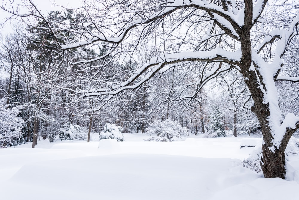 5 Tips for Moving in the Winter!