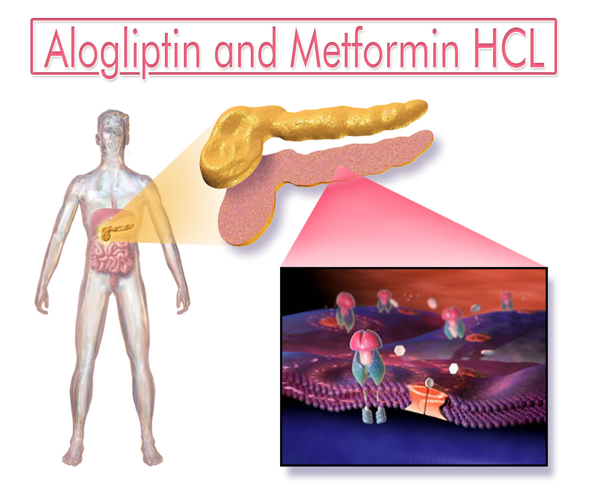 Alogliptin and Metformin HCL