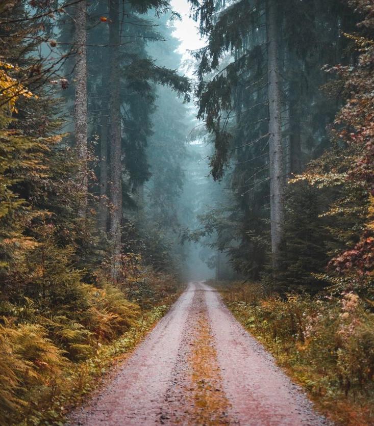 Portrait forest path