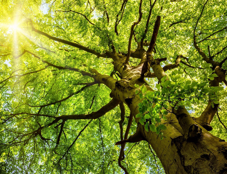 Tree below view