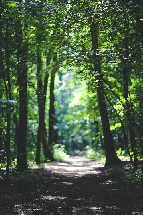 nature-forest-trees-path