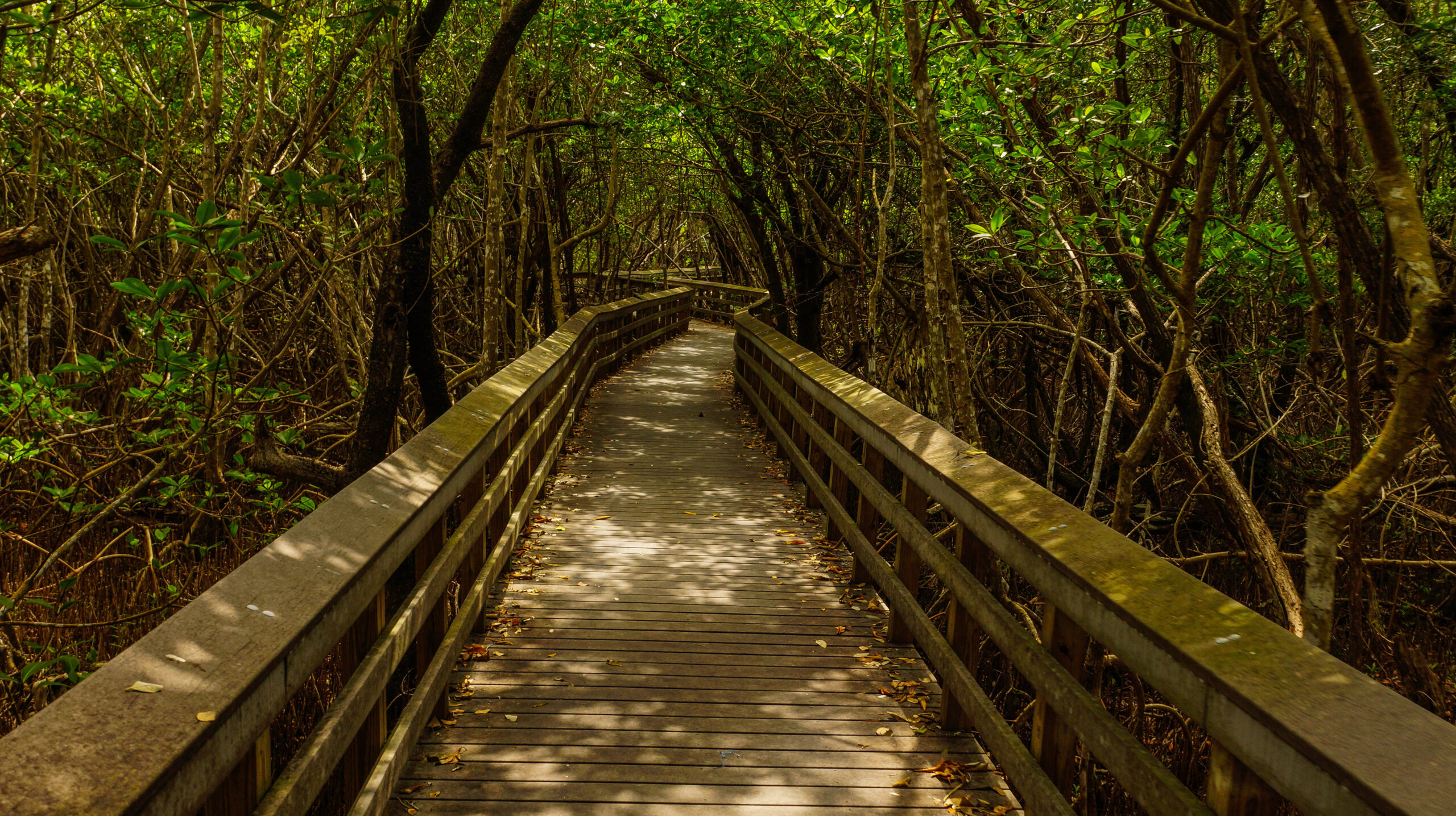 West Lake Trail in Everglades National Park in Florida, United States