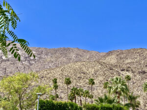 the view from suite 1 with palm trees, blue skies and mountains