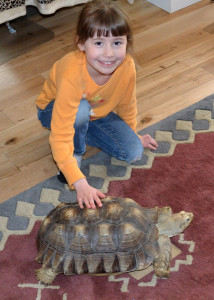 birthday girl & tortoise