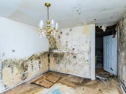 Breaking Mold's Grip on a Home