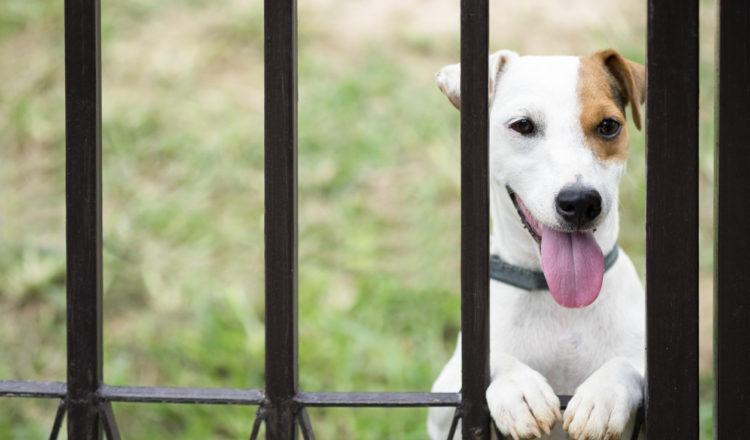 pet-friendly fence