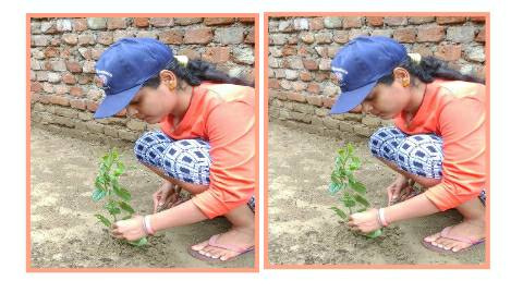 Tree-planter.jpg