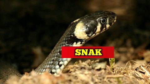 Snake bite-bhojpur