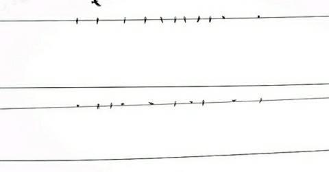 Milky-Piro-electric-Wire