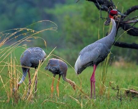 5 - Cranes