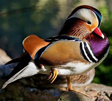 11179391154 9847ec5bc2 k - Ducks