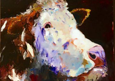 White Face Hereford Bull