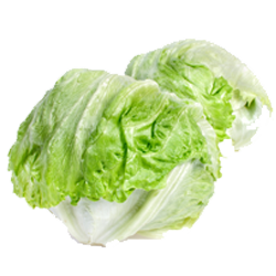 Lettuce, Cello/Head