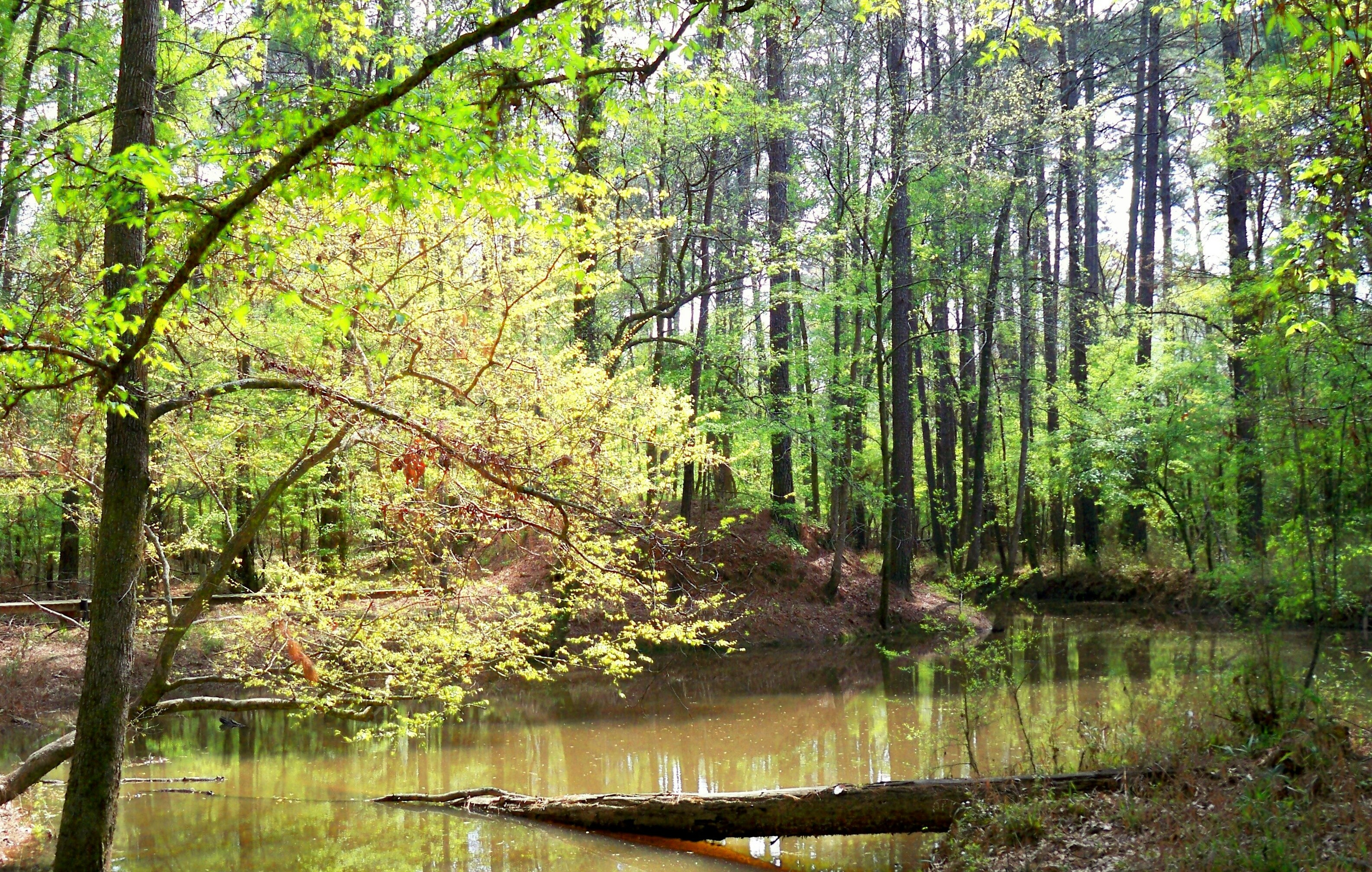 envioronmental and ecological conservation efforts wetland