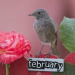 Read more about the article Chirping Birds in February