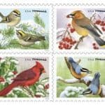 Read more about the article Upcoming Songbirds in Snow Forever Stamps