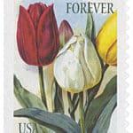 Image of #5044 – 2016 49c Botanical Art - Tulips (White)