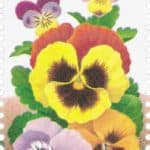 Read more about the article Pressed Pansies Flowers Notecards and 1996 Pansy Stamp