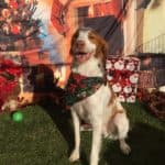 Read more about the article Cooper Awaiting Santa Paws 2017