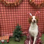 Read more about the article Cooper's Dear Santa Paws 2018 Christmas Letter